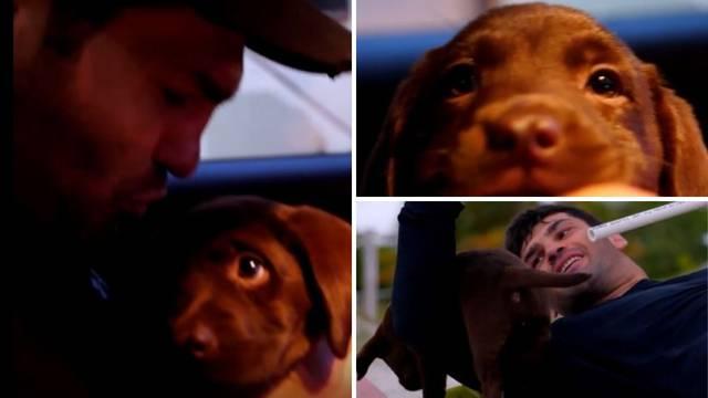 Hrga je predstavio novog člana tima: Stigao čokoladni labrador