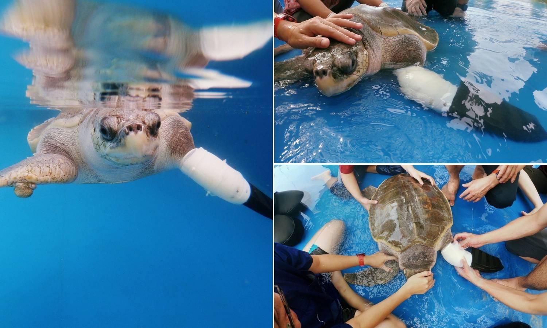 Goody opet pliva! Ugrožena morska kornjača dobila protezu