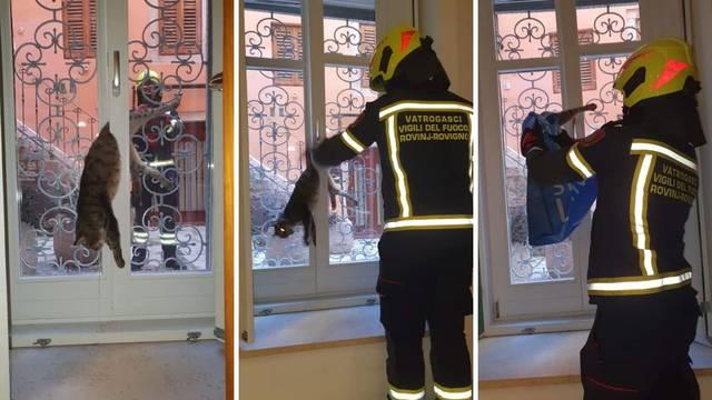 Nestašni mačak skoro stradao: Htio u kuću, zapeo na prozoru!