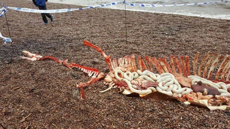 Riješili su misterij? Čudovište iz Loch Nessa nađeno 'mrtvo'