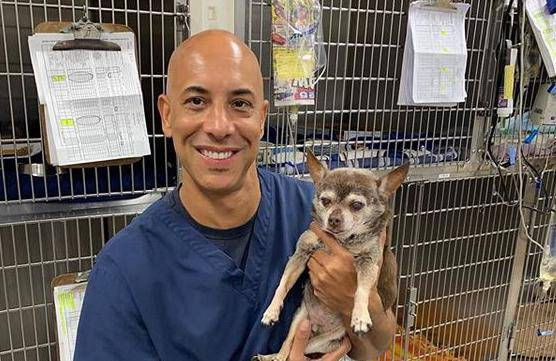 Veterinar u SAD-u besplatno liječi sve ljubimce beskućnika
