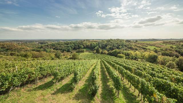 In cultura veritas - projekt koji je spojio lokalne vinare i povijest okolice Zagreba