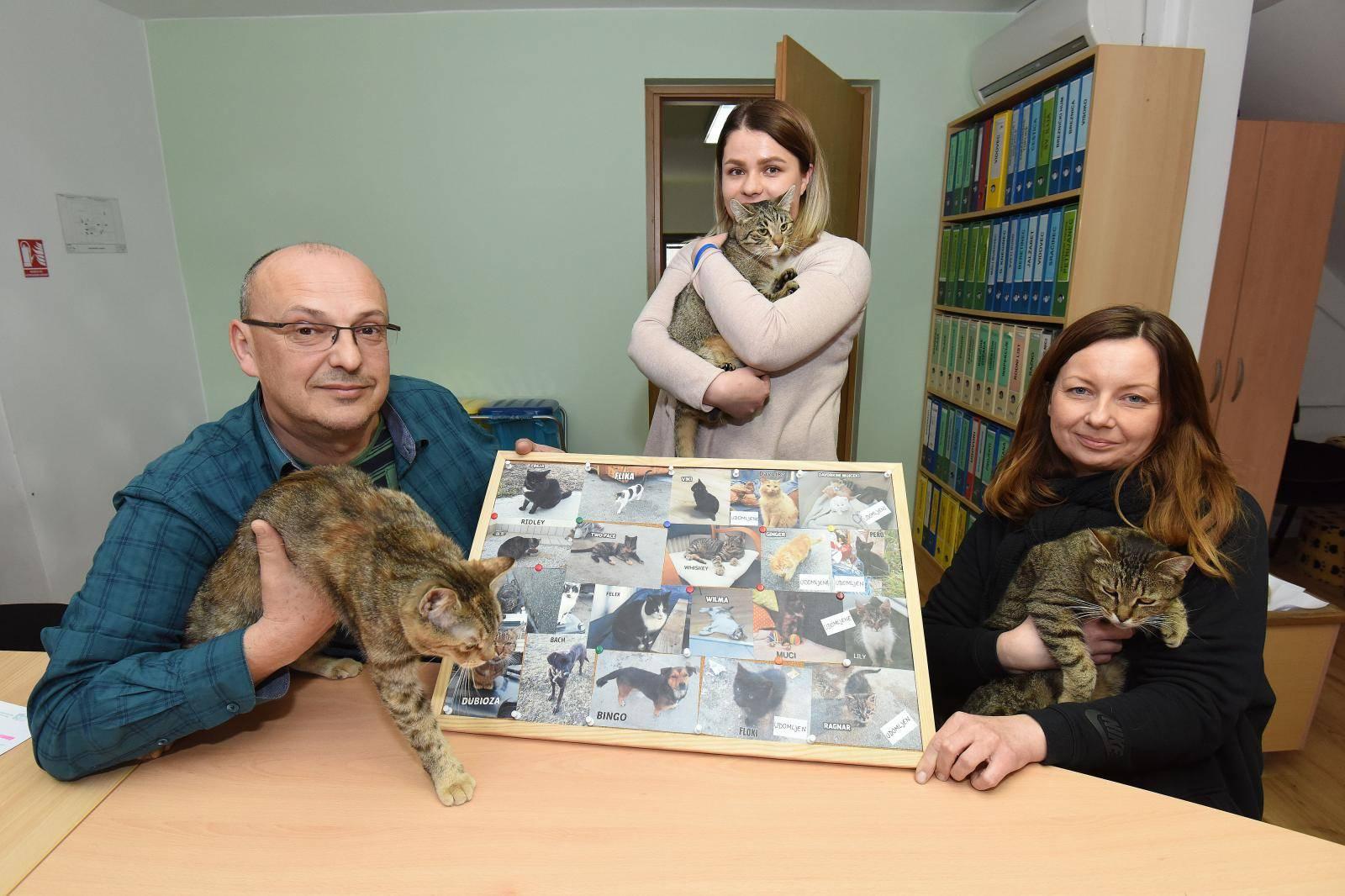 Varaždin: U Čistoći posebnu brigu vode o mačkama koje nemaju gdje biti
