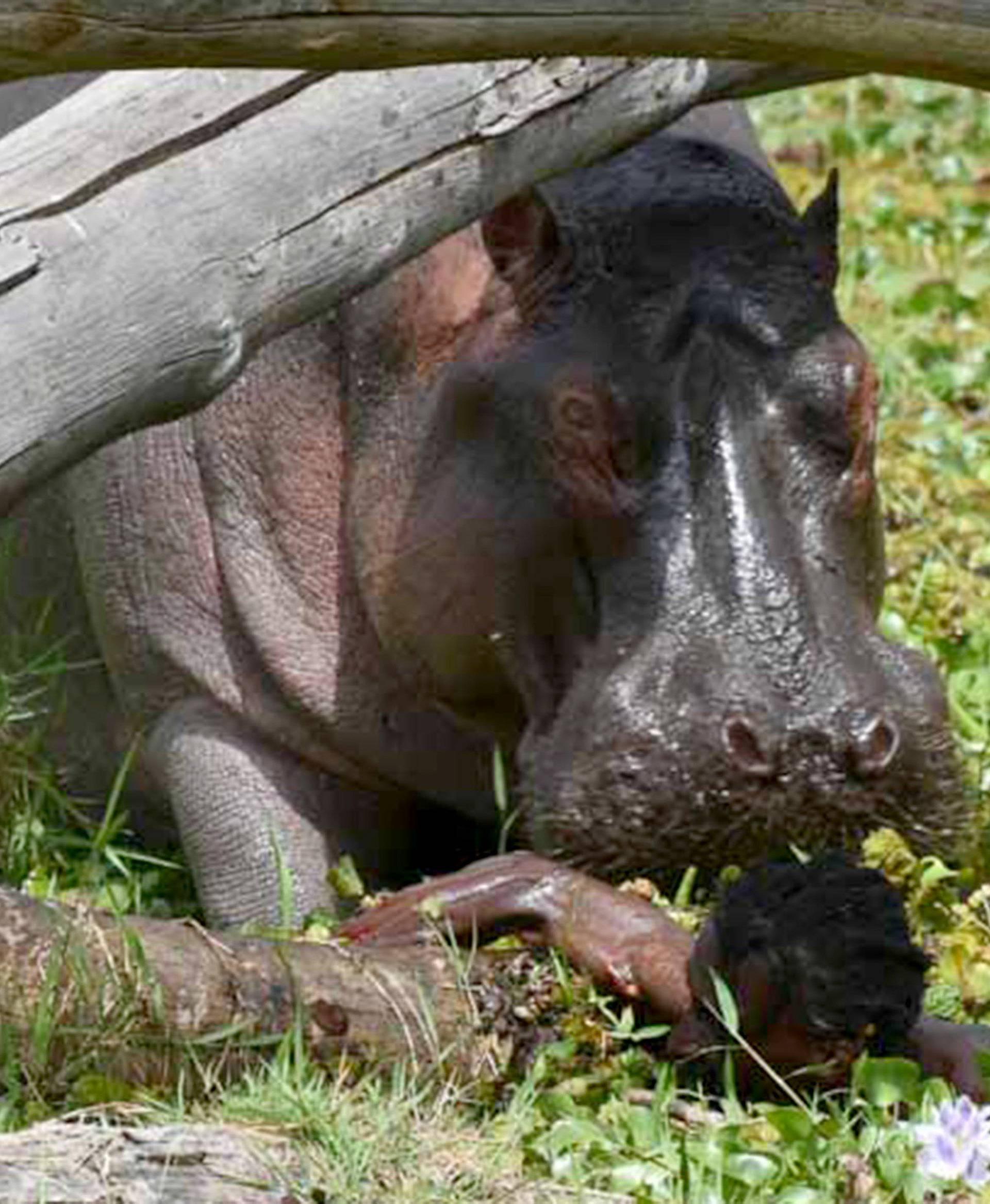 HIPPO ATTACKS FISHERMAN KENYA