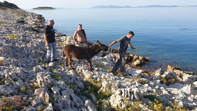 Na otočiću kraj Zadra našli 4 magarca: 'Čini se da su parovi'