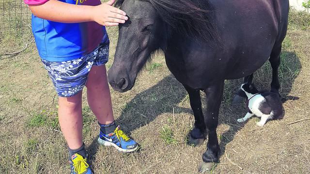 'Đurđa, javi nam se!': Obitelj s Paga traži nestalu ženku ponija