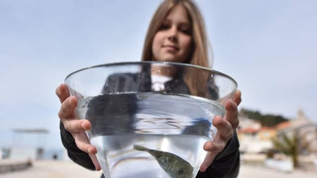 Marieta (9) u Tribunju ulovila najotrovniju ribu na svijetu