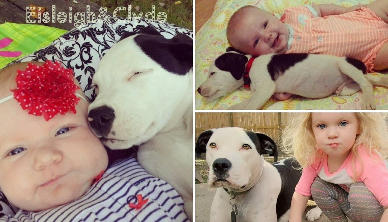 Djevojčica i pit bul odrasli su zajedno i postali nerazdvojni