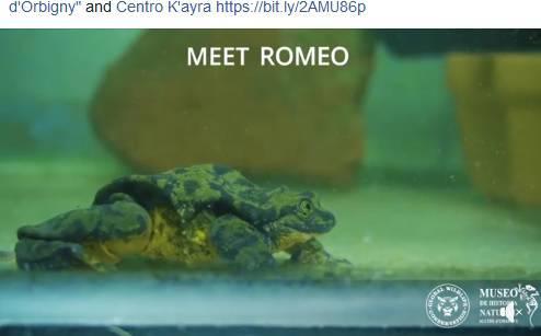Romeo i Julija: Najusamljeniji žabac na svijetu ima 'djevojku'