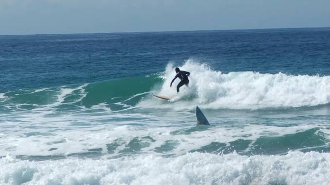 Morski pas ubio surfera koji je izignorirao istaknute zabrane!