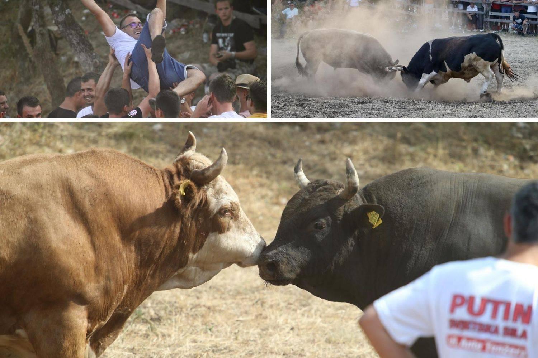 Bikijada u Šestanovcu: 'Nije ovo maltretiranje životinja, to su priče za  djecu, njima je odlično'