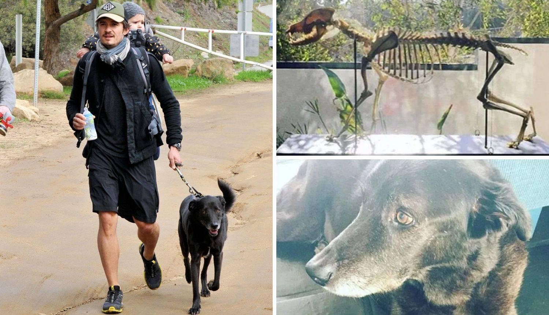 Orlando Bloom: U stanu čuva ostatke kostura pokojnog psa...