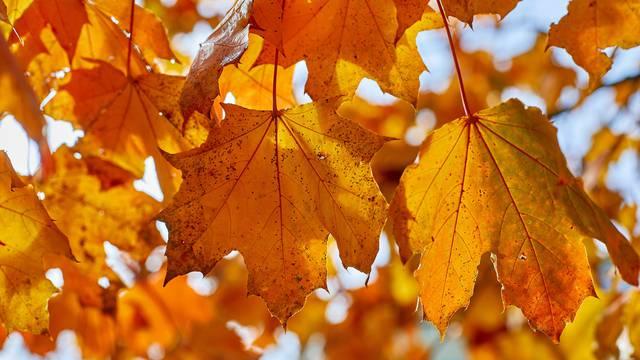 Gdje nestaje zelena: Zašto lišće uopće mijenja boju na jesen?