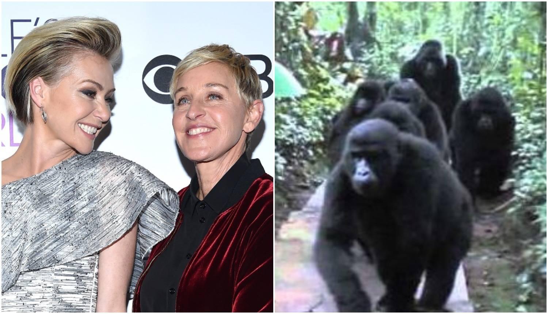 DeGeneres u plaču zbog dara: 'Supruga zna da volim gorile'