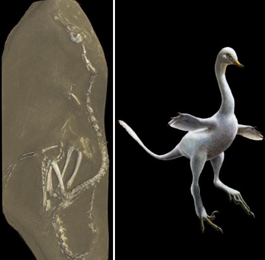 Dinosaur iz noćne more izgleda kao labud s ubojitim kandžama