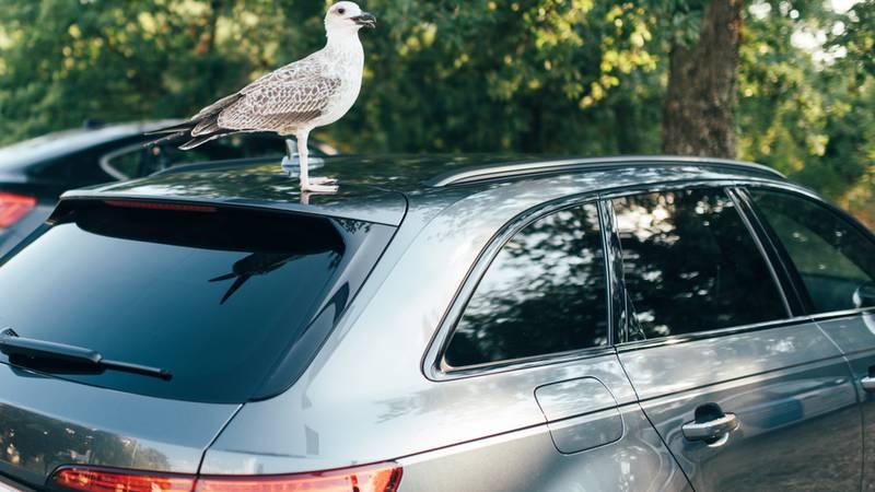 Bizaran događaj na cesti: Kako biste reagirali da vam ptica uleti u auto tijekom vožnje?