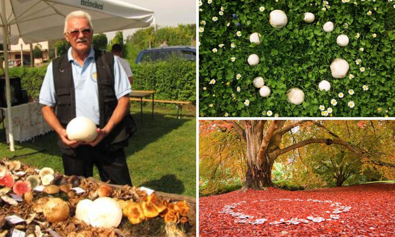 Vilino kolo: Prirodni fenomen u kojem gljive mogu rasti u krug