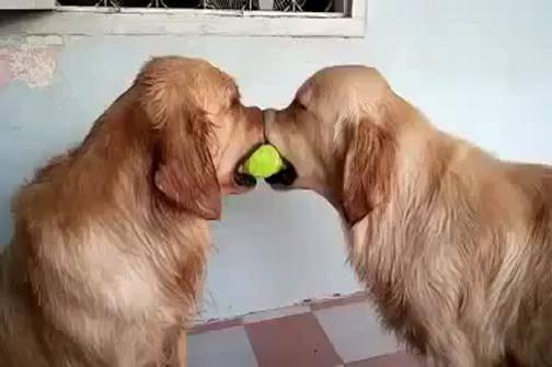 YouTube/LoversDog