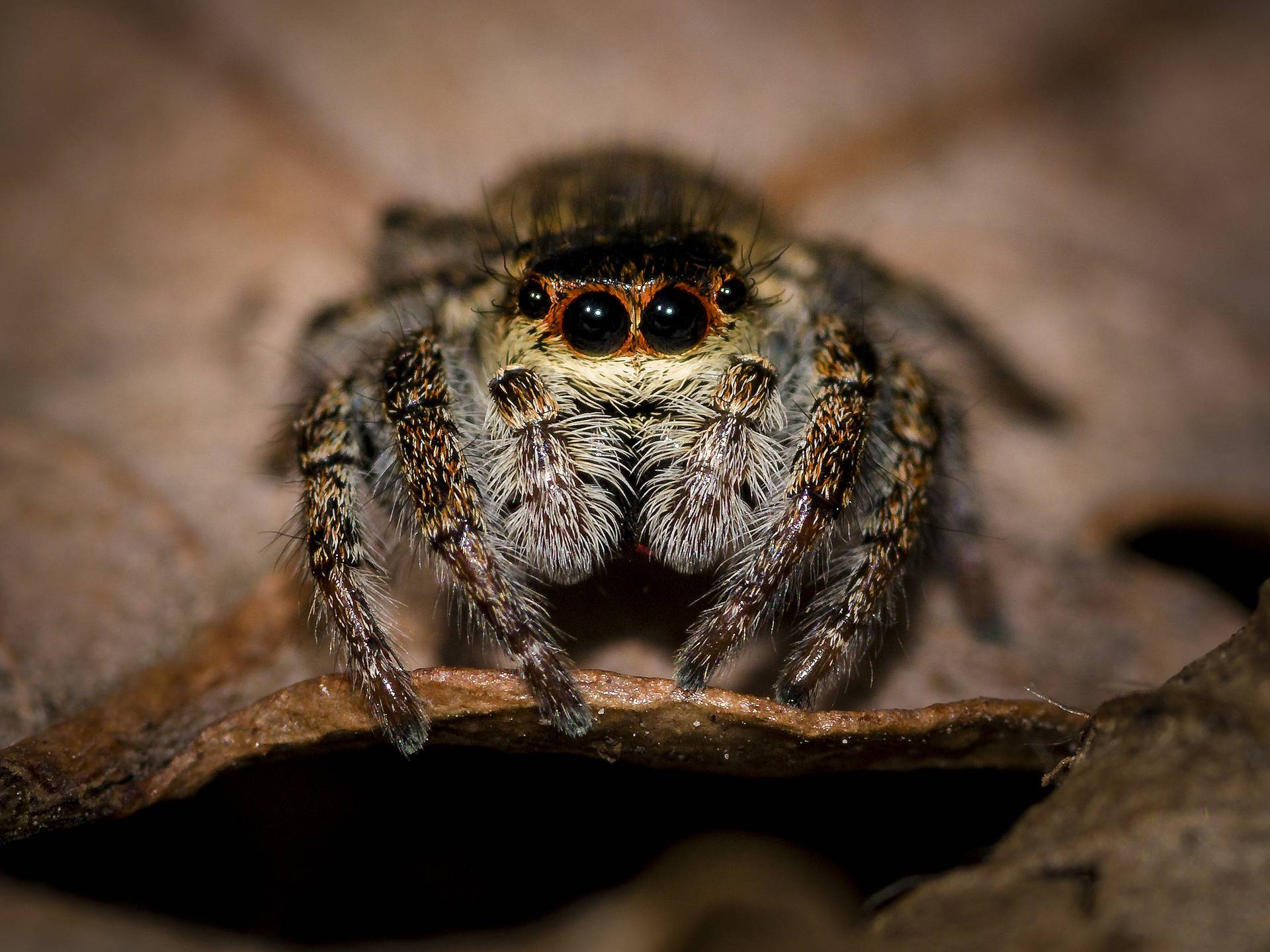 Spriječite 'useljavanje' pauka u vaš dom pomoću ovih trikova