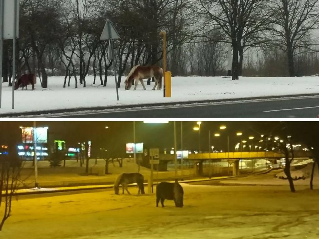 Pobjegli su vlasniku: Cijele su noći pasli uz prometnu cestu