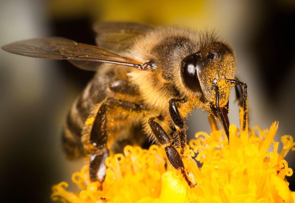 Fantastične stvari koje ne znate o pčelama - mogu brojiti do 5?