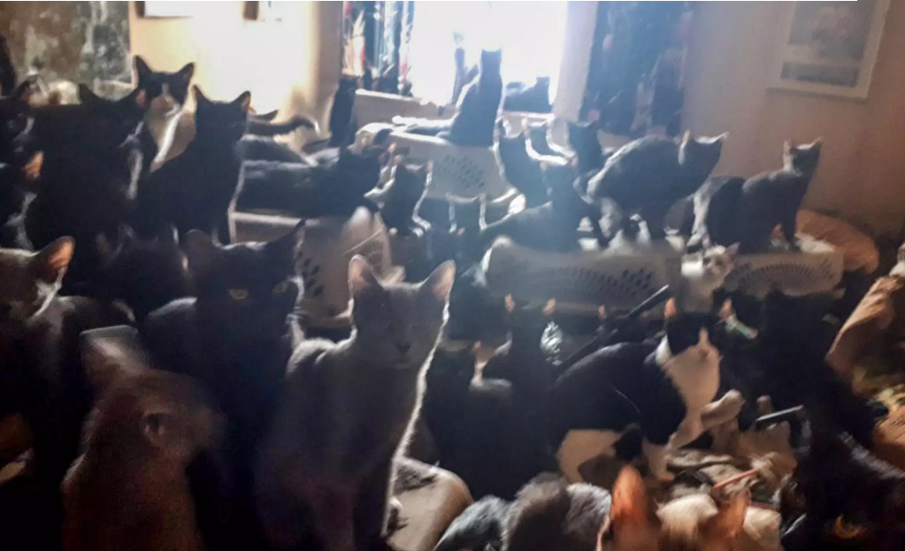 Stravično: U malom stančiću pronašli su više od 300 mačaka