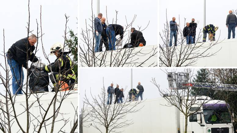 Policija u hladnjači iz Beograda našla više od 90 kila 'trave'