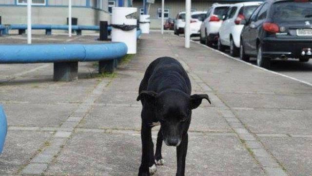 Kao Hachiko: Vlasnik umro, ali pas ga još uvijek čeka u bolnici