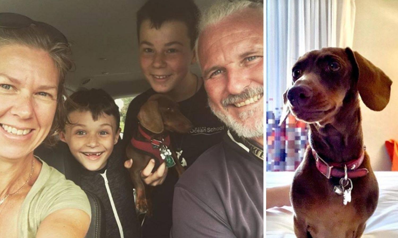 Od Amerike do Australije: Pas se vratio kući nakon pet mjeseci