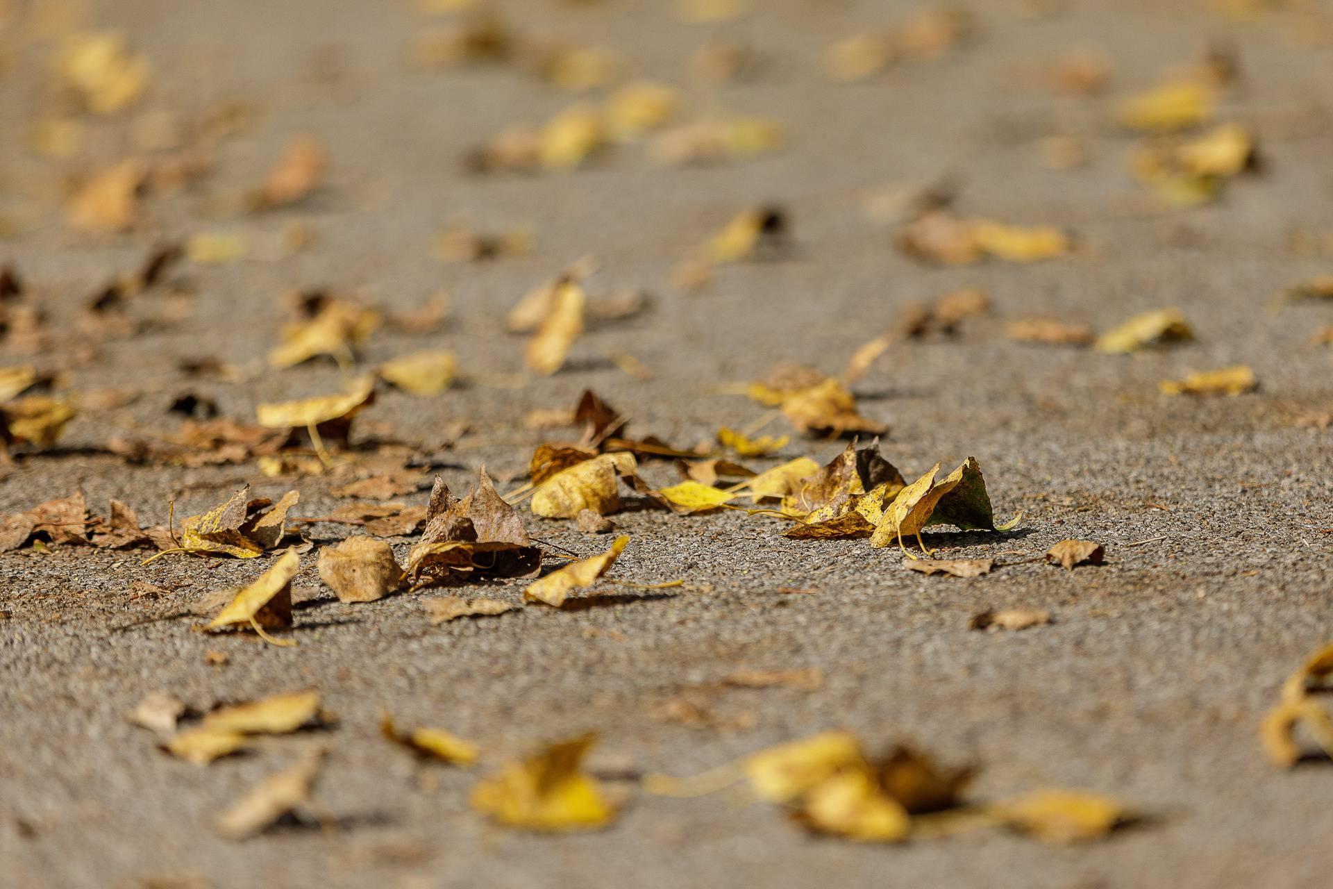 'Tiho, o tiho govori mi jesen: Šuštanjem lišća i šapatom kiše'