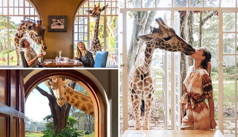 Jedinstven doživljaj: Doručak sa žirafama u hotelu u Nairobiju