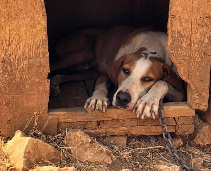 Psa vezali i ostavili bez hrane i vode: Policija je prijavila slučaj
