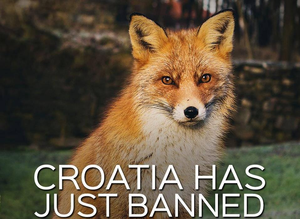Peta na 'fejsu' o zabrani uzgoja životinja za krzno u Hrvatskoj