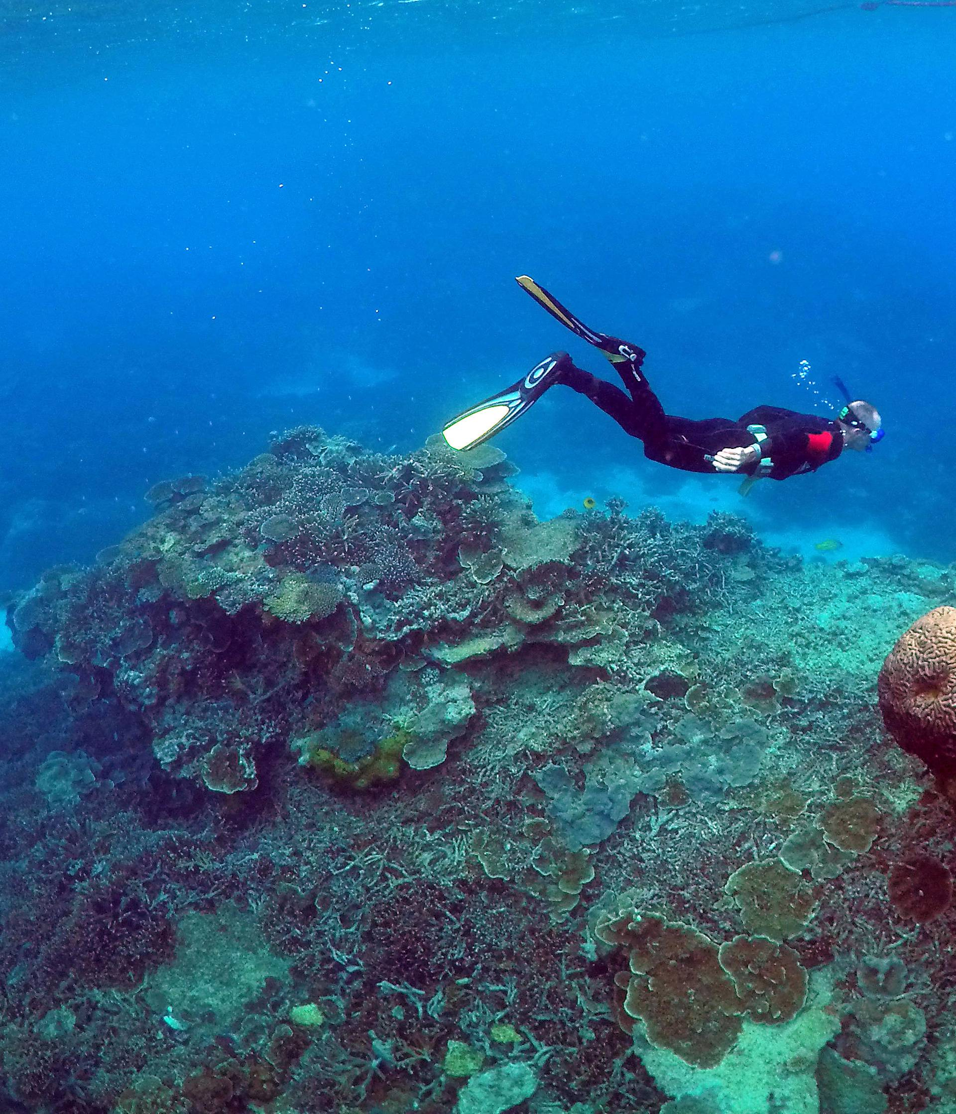 A man snorkels in an area called the 'Coral Gardens' near Lady Elliot Island, on the Great Barrier Reef