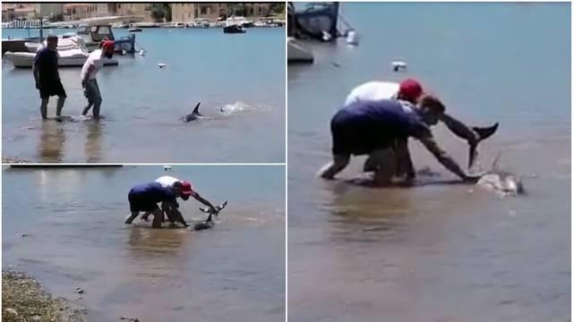 VIDEO: Dvojica ribara spasila dupina, nasukao se u Veloj Luci
