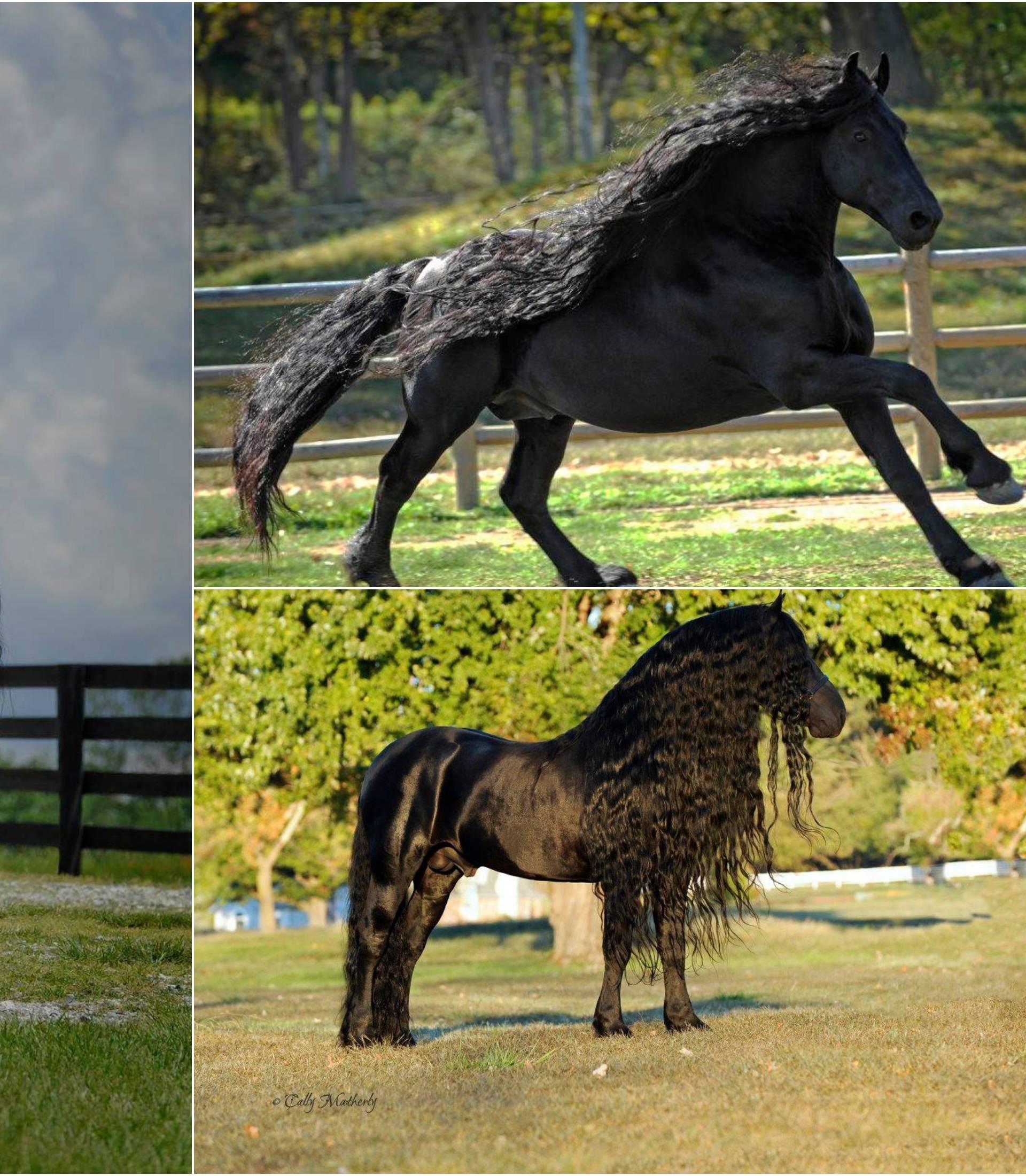 Konj Frederik Veliki