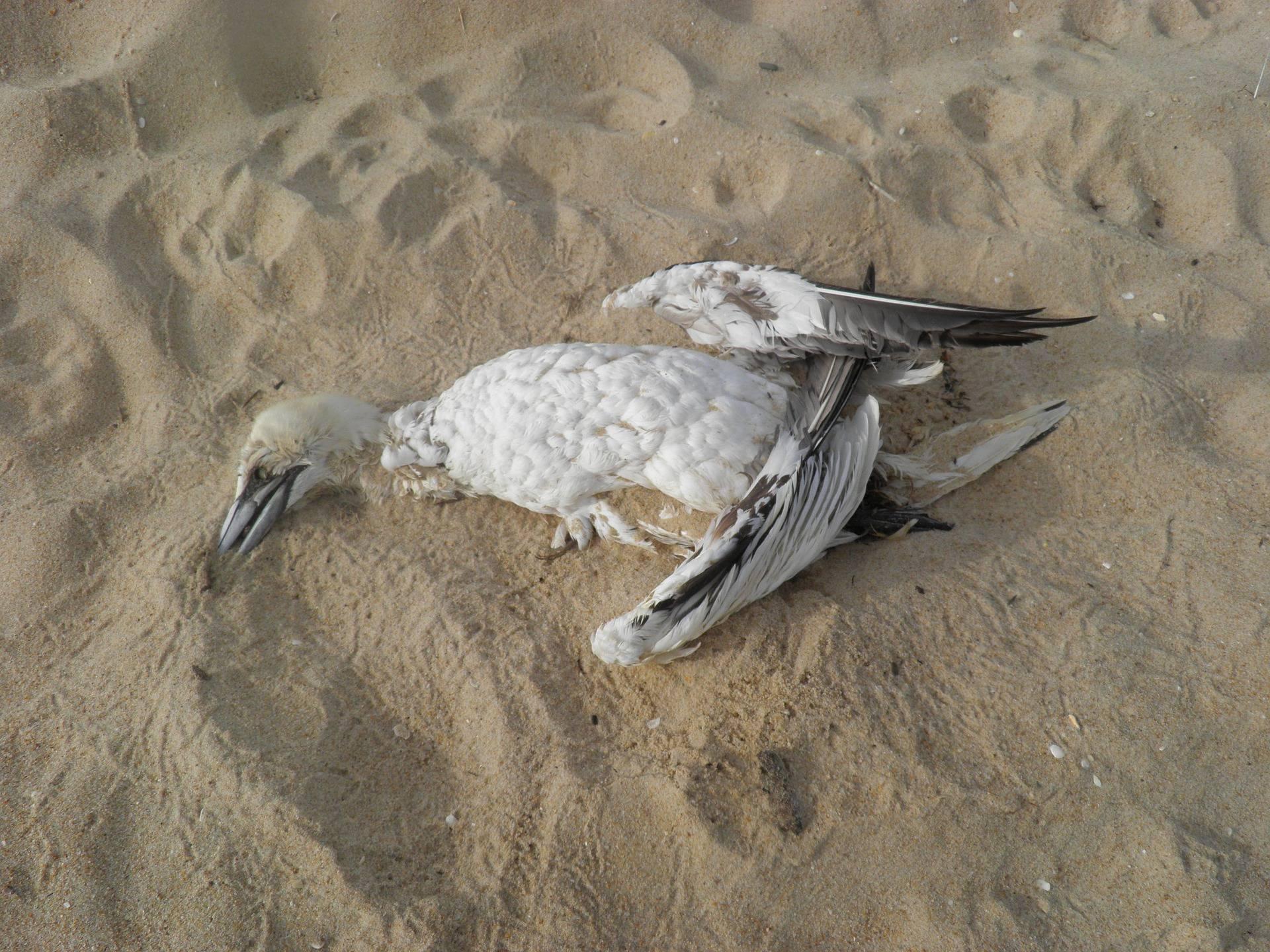 Istraživanje: Najopasniji otpad za morske ptice su baloni