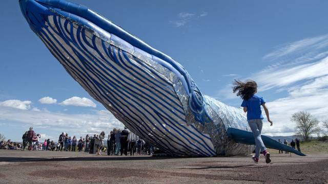 Od plastičnog otpada umjetnici napravili skulpturu plavog kita