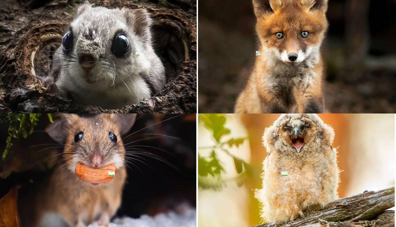 Finski fotograf dane provodi u šumi - da snimi bebe životinja