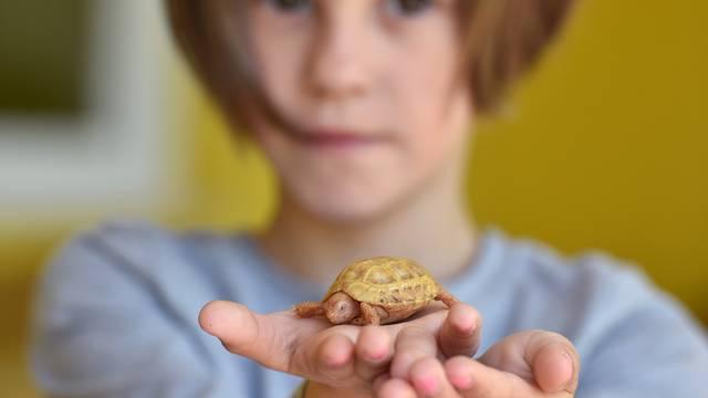 Pronašli  je na cesti:  Ivona (6) brine o albino kornjači Slatkici