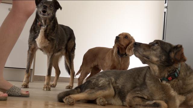 Braća ostaju skupa: Iz azila spasila dva nerazdvojna psića