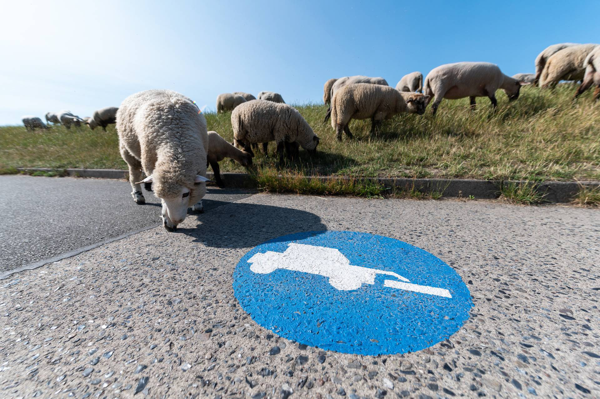 Piktogrami 'ovce na putu'