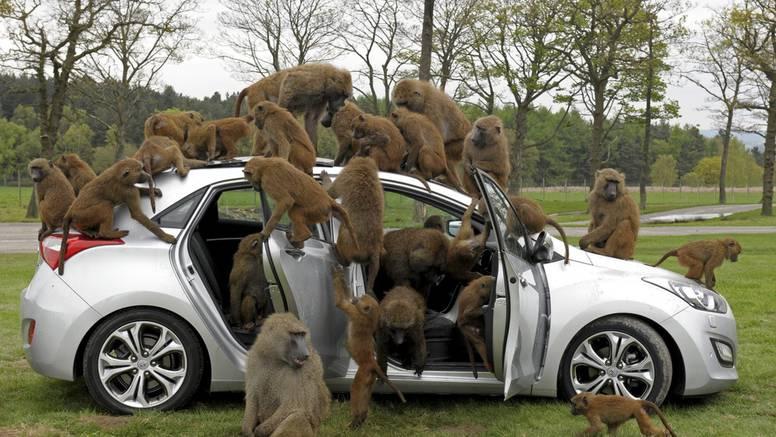 Kakvi majmuni: Pogledajte što su napravili od Hyundaija i30