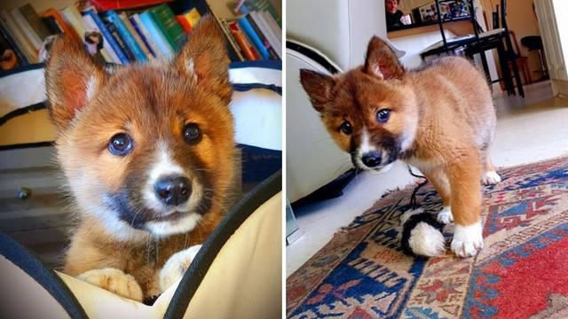 Orlu ispao iz kandži, udomila ga i shvatila da nije običan pas