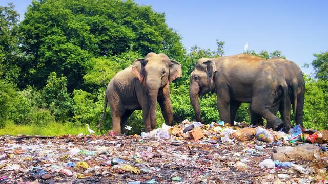 Plastika prijeti životinjama koje migriraju kroz Aziju i Tihi ocean
