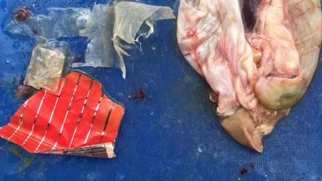 Ulovili ribu punu plastike kraj Iža, no i dalje je 'dobra za jesti'