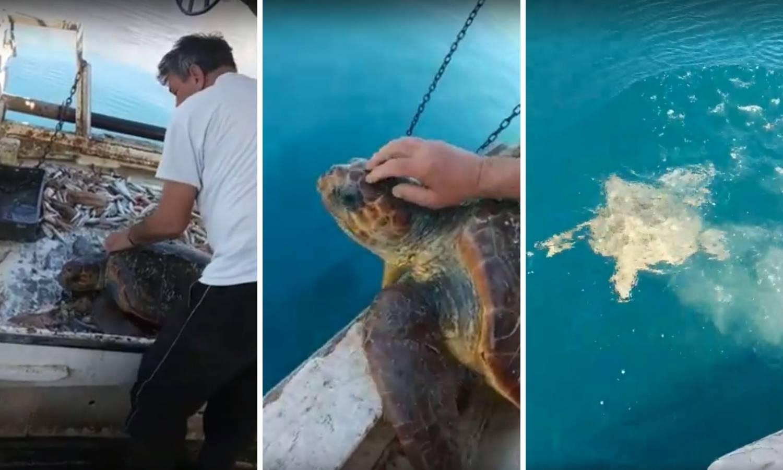 U mreži našao i spasio želvu: 'Bio nam je baš dobar osjećaj'
