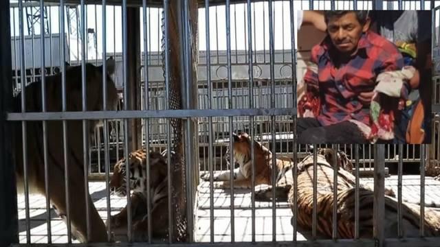 Užas u cirkusu: Tigrovi iščupali ruke muškarcu koji ih je hranio