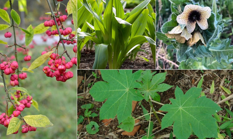 Otrov vreba na livadama: Ove biljke ne jedite, mogu vas ubiti!