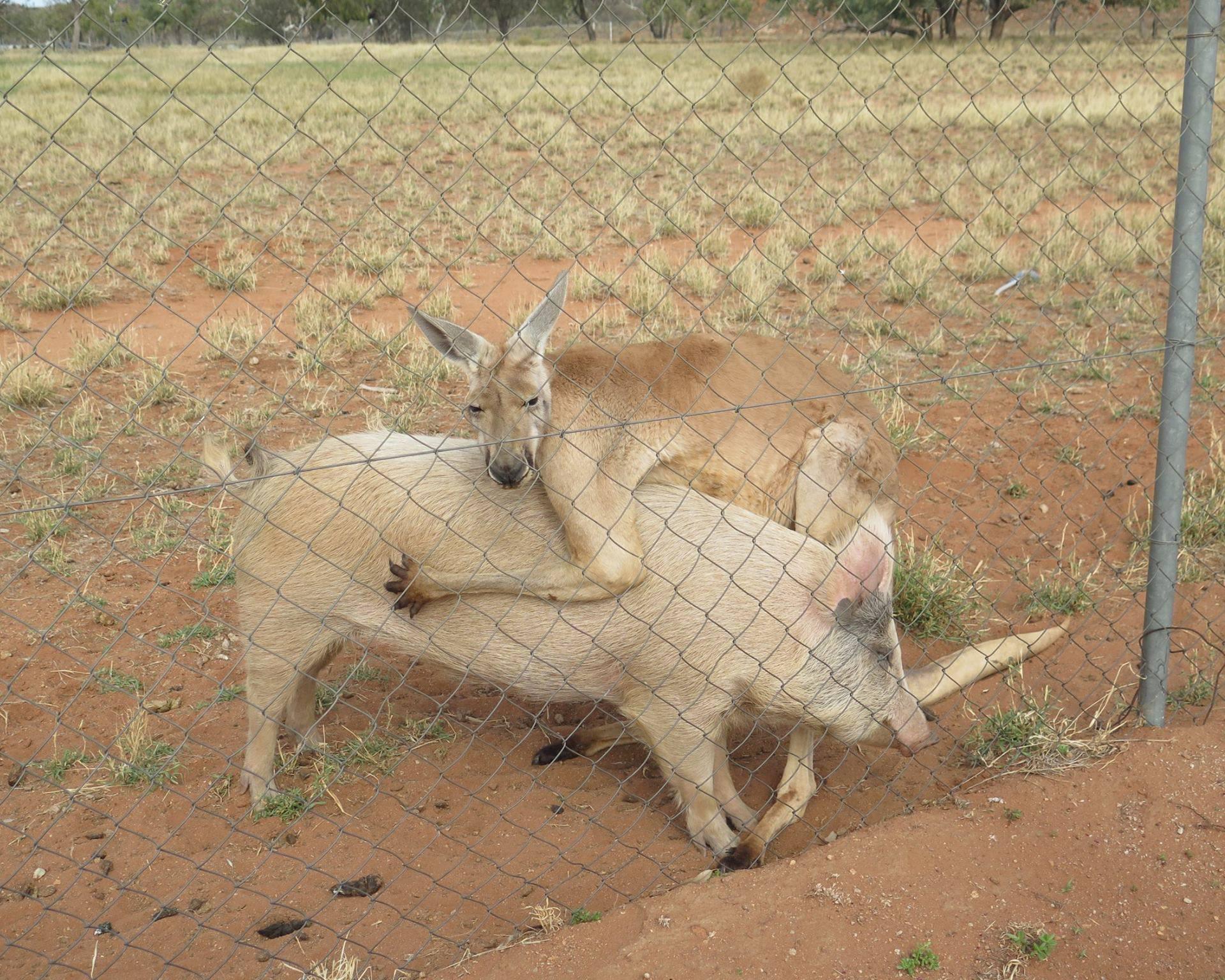 Ovo je jedini mužjak koji dragoj smije reći 'Kakva si ti svinja!'